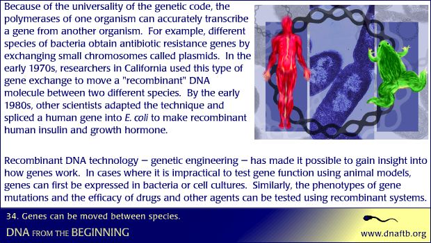 Concept 34: Genes can be moved between species.